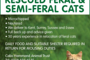 FERAL AND SEMI-FERAL CATS...
