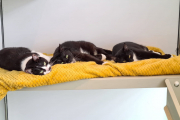 Not Barry, Bailey and Hudson - Special home needed/Permanent foster