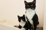 Skye and Lewis- Mum and baby seeking home together