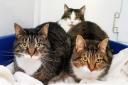 3 Garden Cats-Adopted!