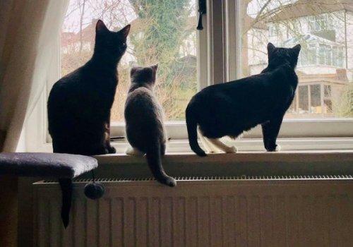 Gertie, Acorn and Graham Norton