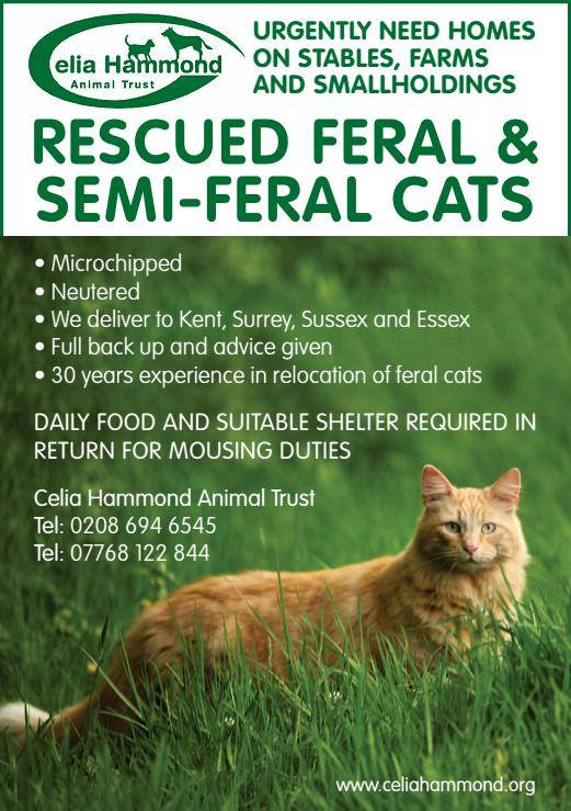 natural remedy for cat bladder infection