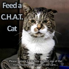 Feed a C.H.A.T. cat - Donate here!