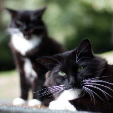 Cat Sponsorship Pack