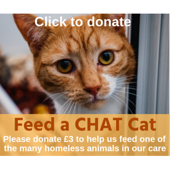 Feed a CHAT rescue cat